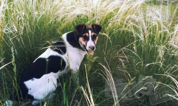 Умный и красивый щенок бесплатно