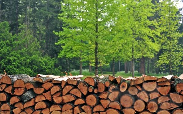 Куплю дрова акации в Днепропетровске опт
