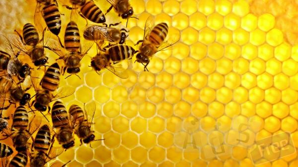 Куплю мед в Херсонской области.