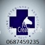 Вызов ветеринара на дом 068 745 92 35