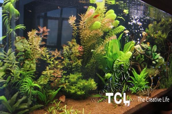 Оформление и запуск аквариумов и терррар
