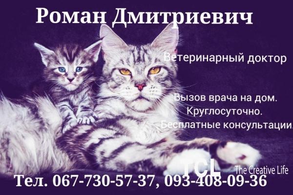 Ветеринар выезд на дом. О9З 4О8-О9-З6