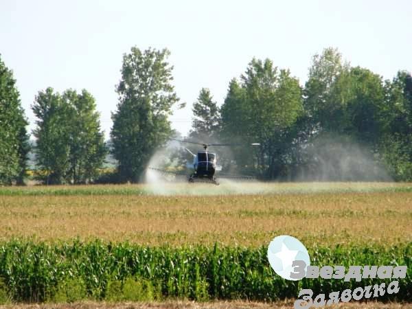 Авиахимобработка кукурузы вертолетом