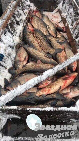 Предприятие реализует рыбу  Опт