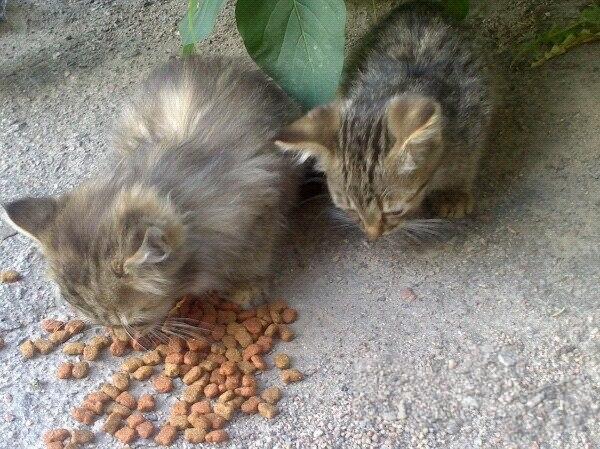 Помогите спасти котят от голода