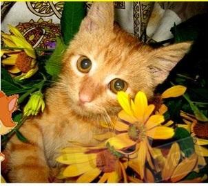 Рыйжий котик ищет хозяев