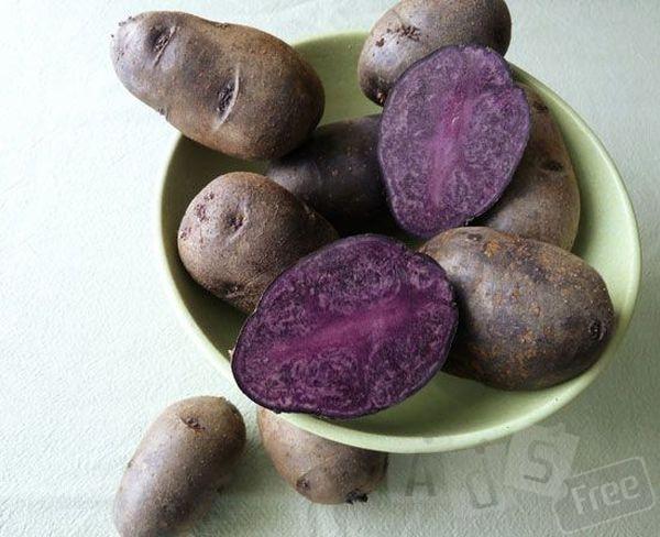 Лиловая картошка корнеплод
