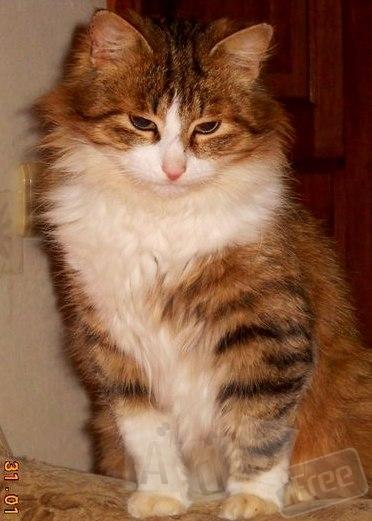 Молодой, очень красивый котик ищет дом.