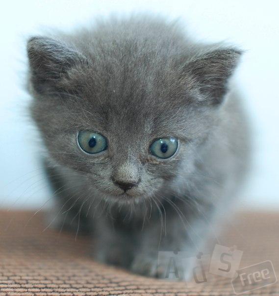 Пушистенькие меховые котятки