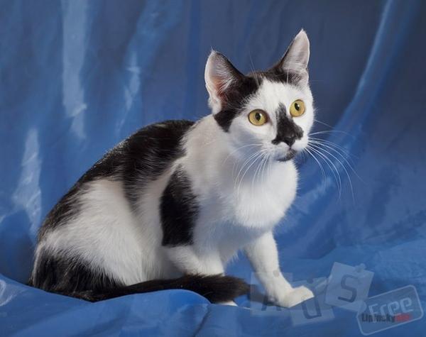 Хозяйка хочет сдать кошеку в Кп или куда угодно