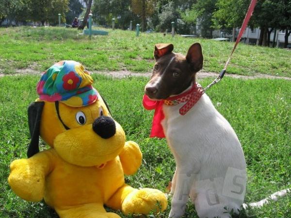 Нужна помощь в поисках хозяев такому замечательному щенку