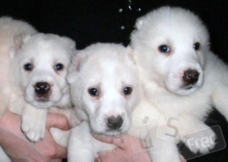7 щенков