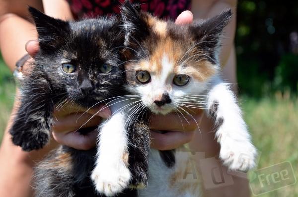 Замечательные котята в хорошие руки