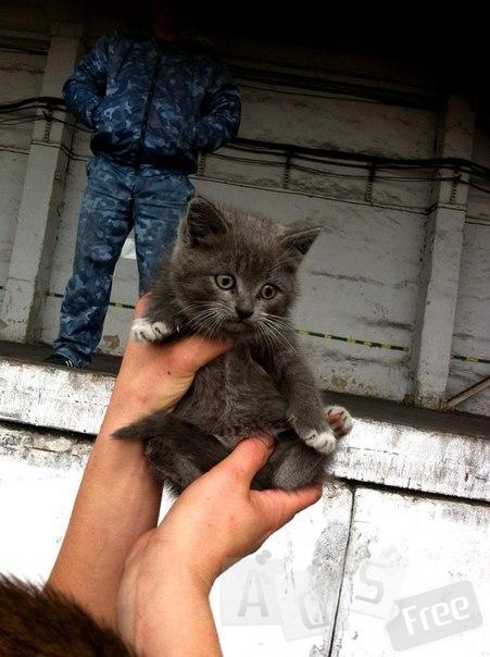 бездомные котята, которые живут на улице