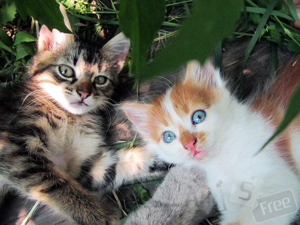 Отдаем котиков